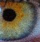 File: eye photo-mosaic all 2400 Thumbnail version