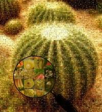 Cactus de photos de cactus