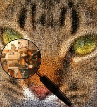 cat photograph made of cats and kittens images