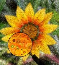 Fleur de photos de fleurs