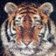 File: tiger photo-mosaic cats 2400 Thumbnail version